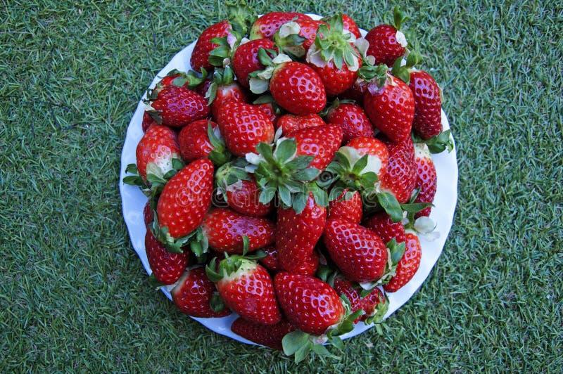 Stor vit platta med röda jordgubbar på gräsbakgrunden fotografering för bildbyråer