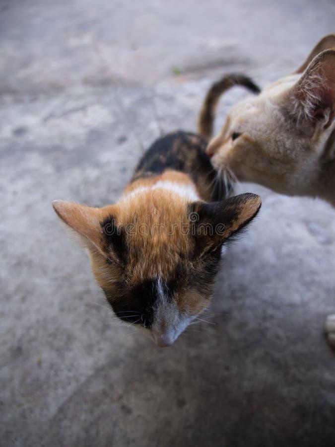 Stora Cat Takes Care av den lilla katten royaltyfria bilder