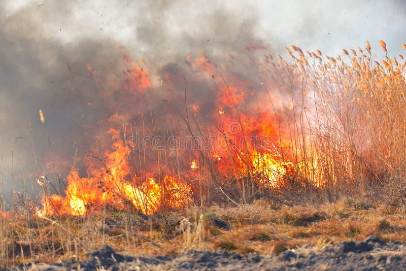 stora fältbrandflammor Tillfällig katastrof royaltyfri foto