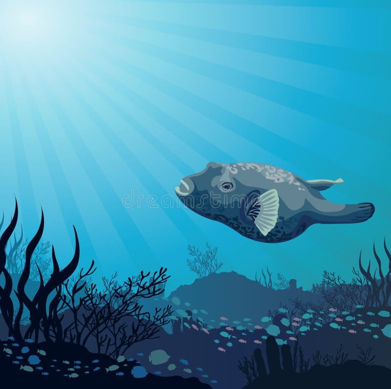Stora fisk och koraller vektor illustrationer