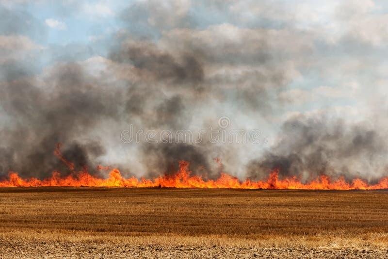 Stora flammor i ett skördat fält royaltyfri foto