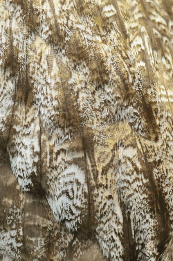 Stora Grey Owl fjädrar royaltyfri fotografi