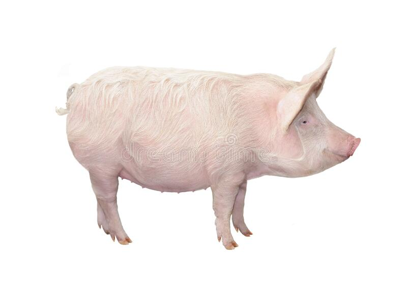 Stora grisar isolerade på vitt arkivbilder