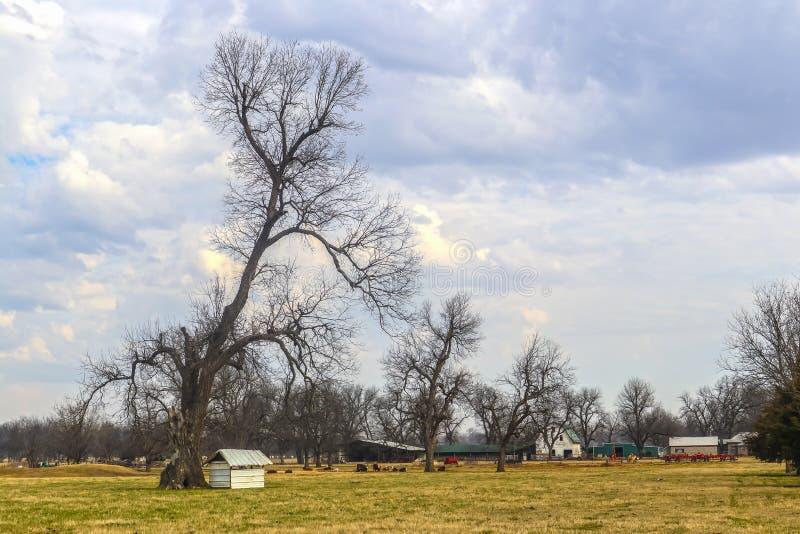 Stora karga träd i lantgårdfält med ladugården och uthus och kor i bakgrund under dramatisk molnig himmel arkivbild