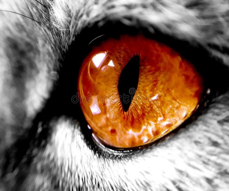 Stora orange katts öga, zoom royaltyfri bild