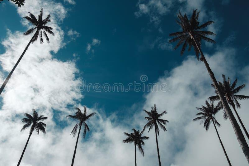 Stora palmträd mellan den lokaliserade berg och skogen i Colombie arkivbild