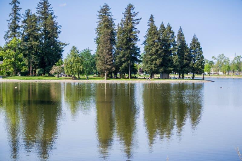 Stora redwoodträdträd reflekterade i det lugna vattnet av sjön Ellis, Marysville, Kalifornien royaltyfria bilder