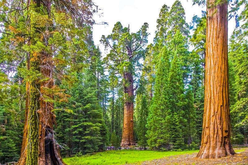 Stora sequoior i härlig sequoianationalpark arkivbild