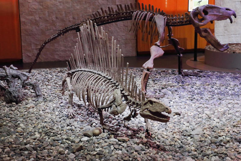 Stora skelett av dinosaurier i museum fotografering för bildbyråer