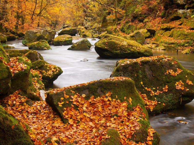 Stora stenblock med stupade sidor Banker för höstbergflod Grus och nya gröna mossiga stenblock på banker med färgrika sidor fotografering för bildbyråer