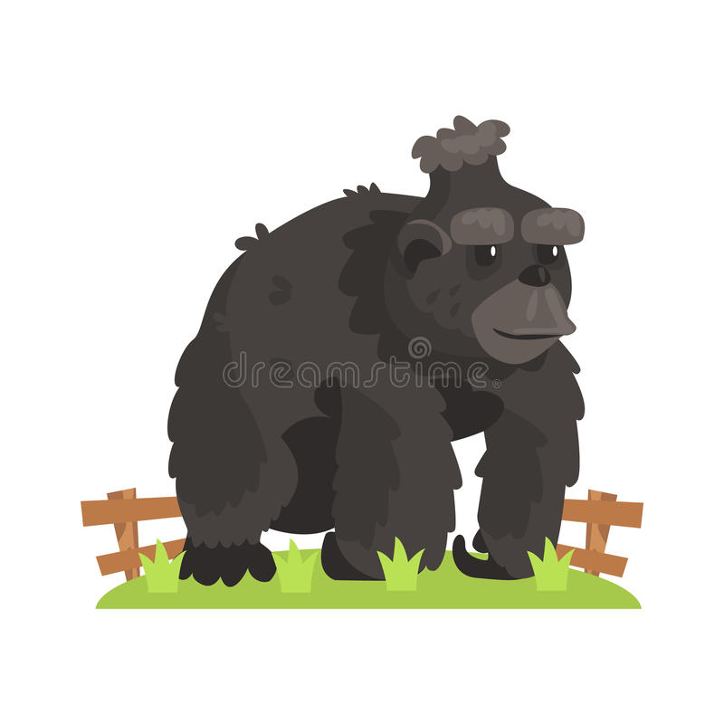 Stora svarta Gorilla Wih Scruffy Fur Standing på lapp för grönt gräs i zoobilaga för öppen luft stock illustrationer
