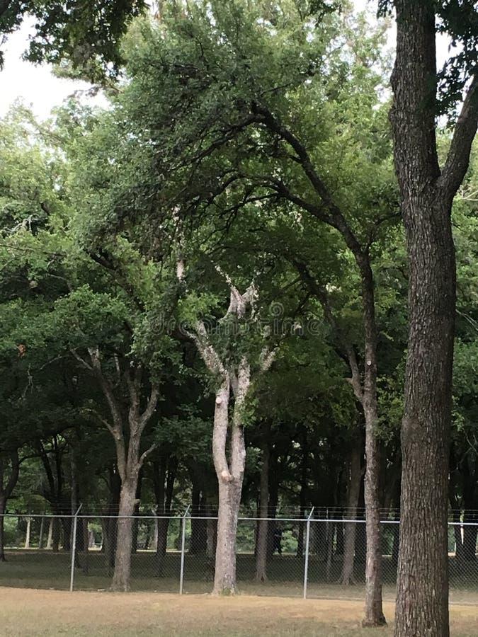 Stora träd! royaltyfri foto