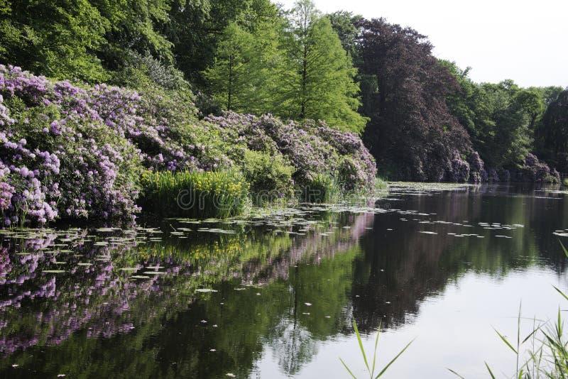 Stora trädgårdar i skog nära Baarn i Holland arkivbild