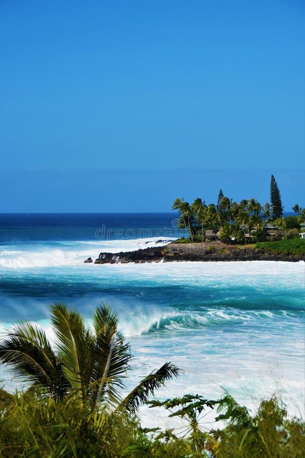 Stora vågor på den Waimea fjärden, Oahu, Hawaii, USA royaltyfri bild