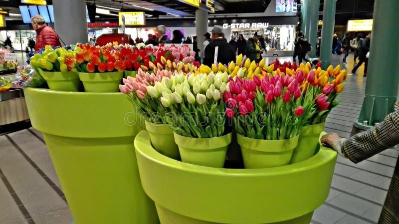 Stora vaser av fejkar blommor, nämligen tulpan, arkivfoton