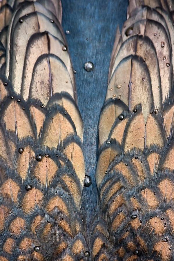 stora vingar för cormorant fotografering för bildbyråer