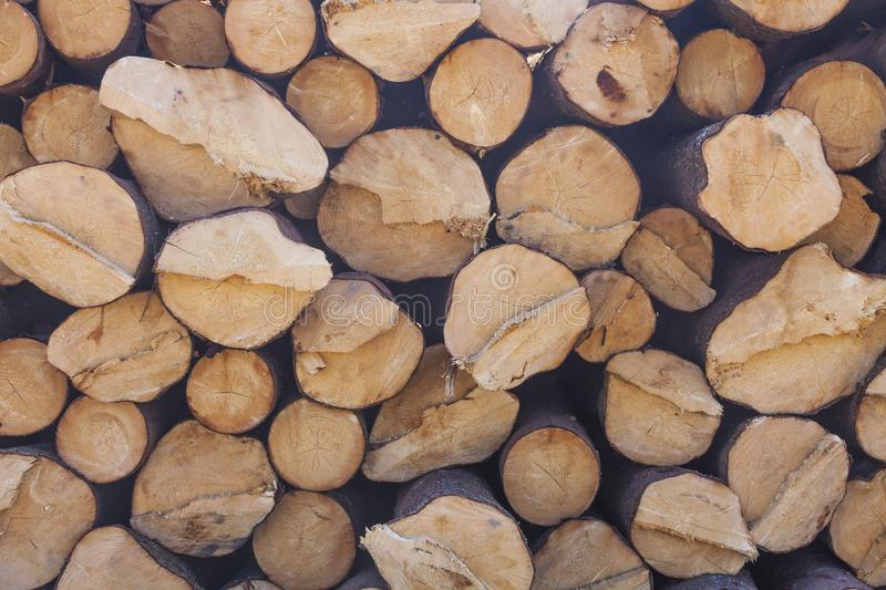 Storage of logs. Collapsed tree trunks. Storage of logs. Logging. Collapsed tree trunks royalty free stock photo