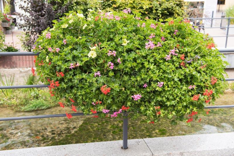 Storartad blommagarnering på räcke i dåliga Lippspringe arkivbild