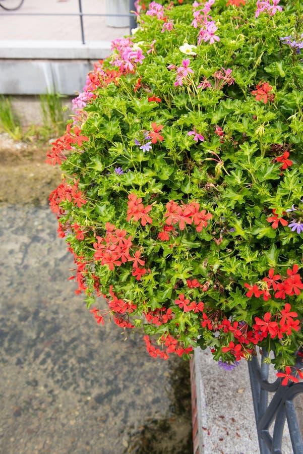 Storartad blommagarnering på räcke i dåliga Lippspringe royaltyfri fotografi
