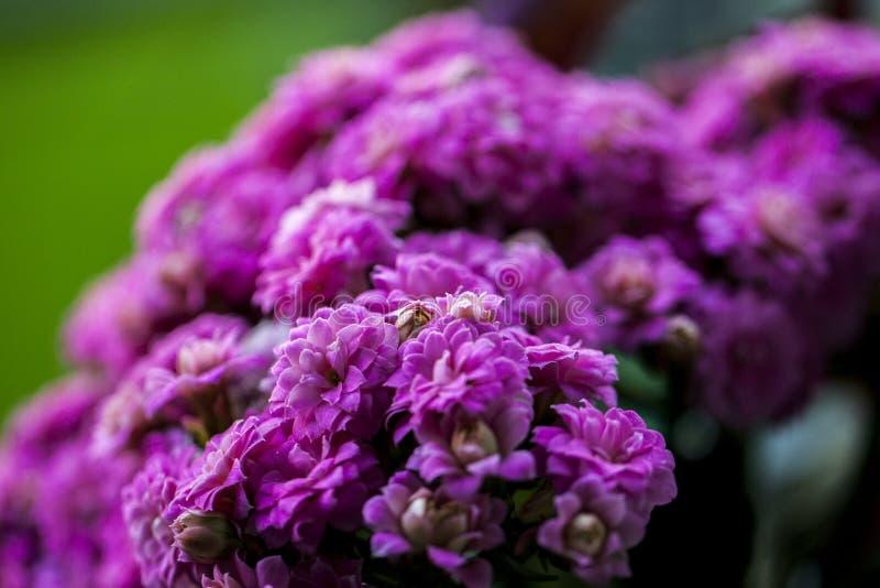 Storartad sikt av en blommad blomma fotografering för bildbyråer