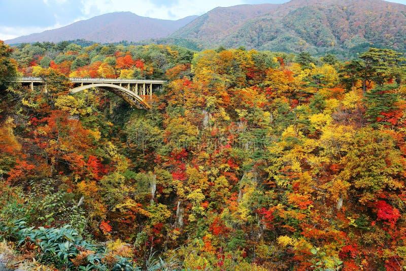 Storartad sikt av en huvudvägbro som spänner över över den Naruko klyftan med färgrik höstlövverk på vertikala steniga klippor i  arkivbilder
