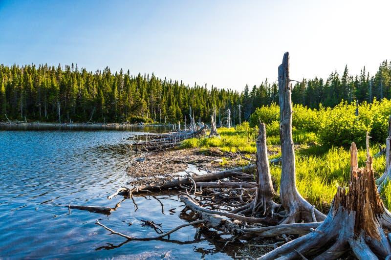 Storartad sjö i den Forillon nationalparken royaltyfria bilder