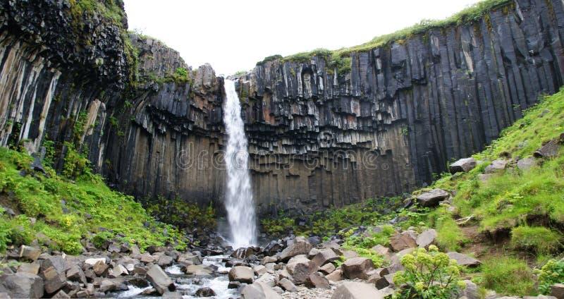 Storartad Svartifoss vattenfall också som är bekant som den svarta nedgången Lokaliserat i Skaftafell, Vatnajokull nationalpark,  royaltyfri fotografi