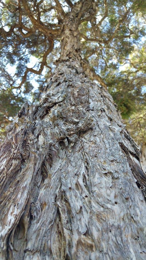 Storartad tree arkivbilder