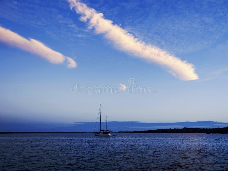 Storartade vita Contrailcirrusmolnmoln i blå himmel australasian royaltyfri bild