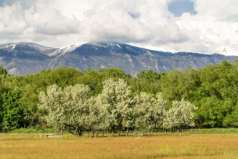 Storartat berg som står högt över frodiga träd och expansivt gräs- fält fotografering för bildbyråer