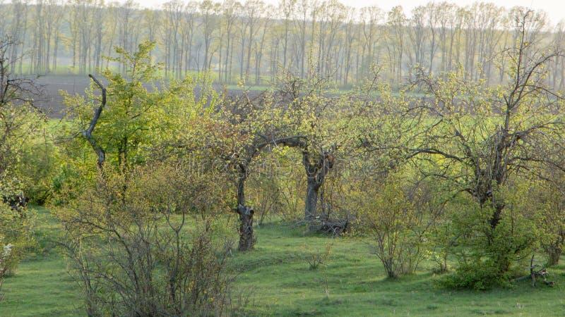 Storartat landskap av den gröna ängen för sommar, på gryning fotografering för bildbyråer