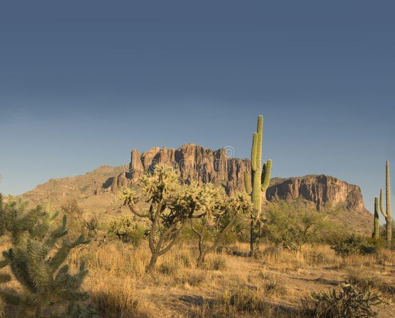 storartat landskap för arizona öken arkivfoton