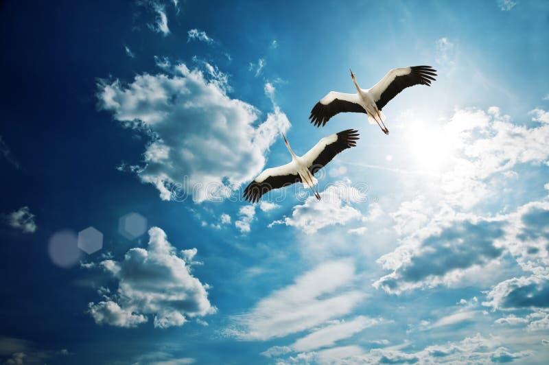 Storch stockbild