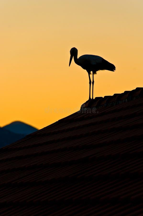 Storch auf dem Dach lizenzfreies stockfoto