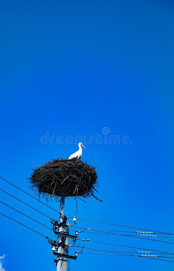 Storch auf dem Nest stockbild