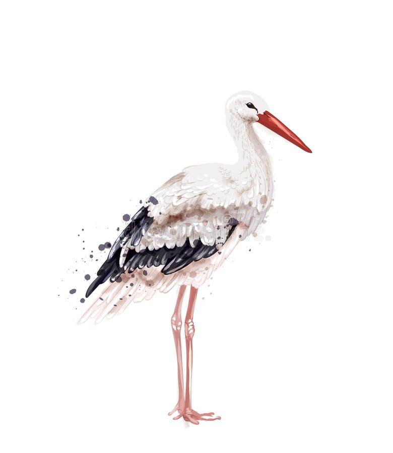 Storch-Vektoraquarell lokalisiert auf Weiß Ikone gemalte Artillustrationen vektor abbildung