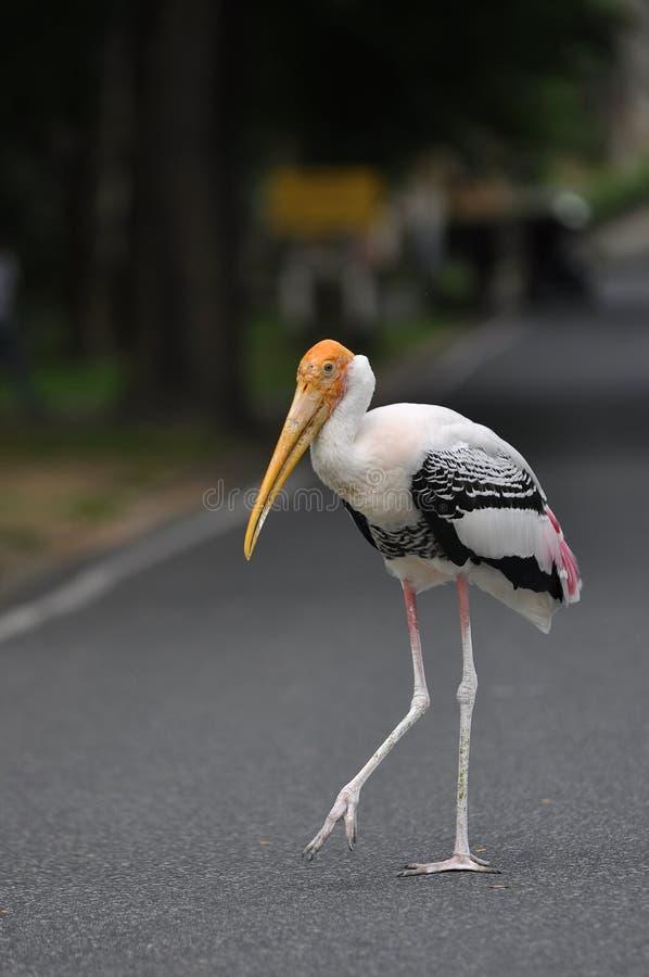 Storch-Vogel stockbilder