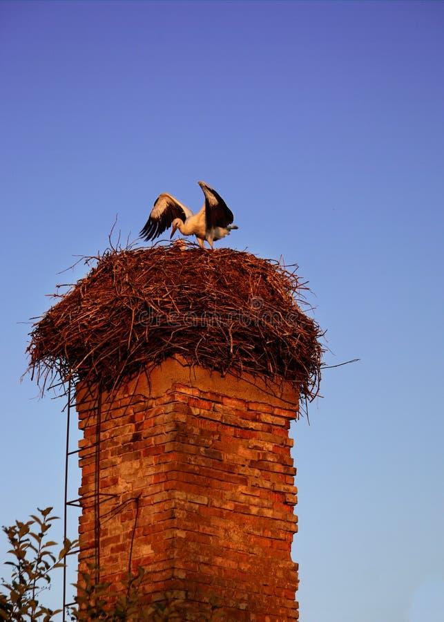 Storch-Vogel auf dem alten Ziegelstein-Kamin stockbild