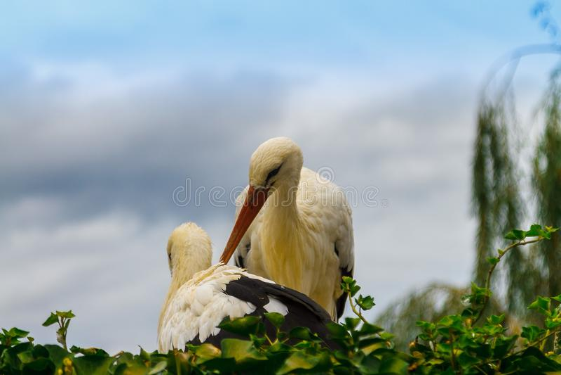 Storchfamilie im Nest lizenzfreie stockfotografie