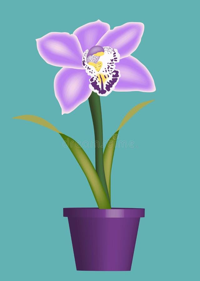 storczykowe purpury fotografia stock