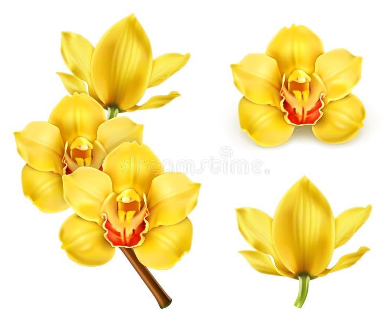 Storczykowi kwiaty, wektorowe ikony ilustracji