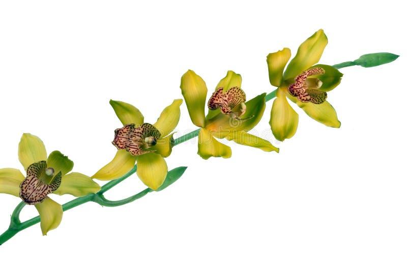 storczykowy kolor żółty obrazy stock