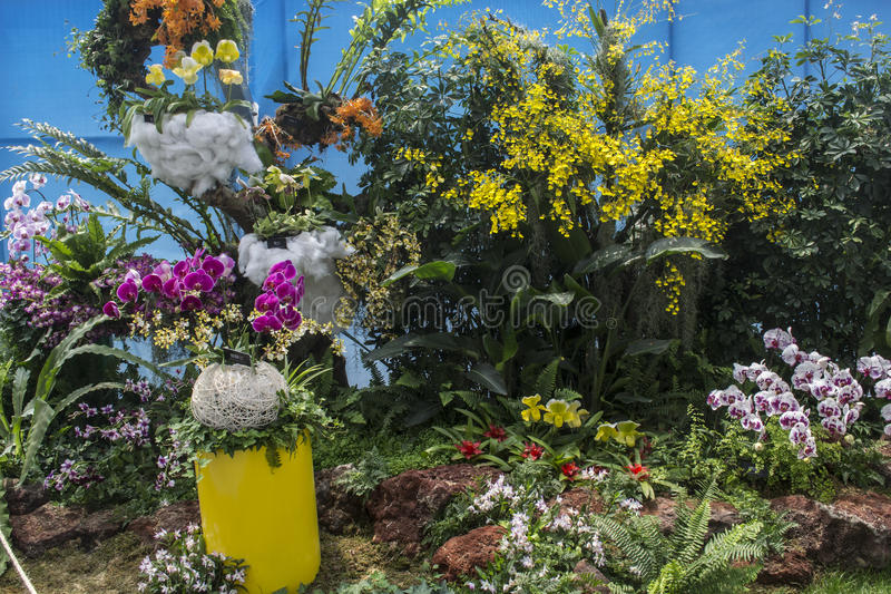 Download Storczykowy przedstawienie zdjęcie stock. Obraz złożonej z ogrodnictwo - 41950404
