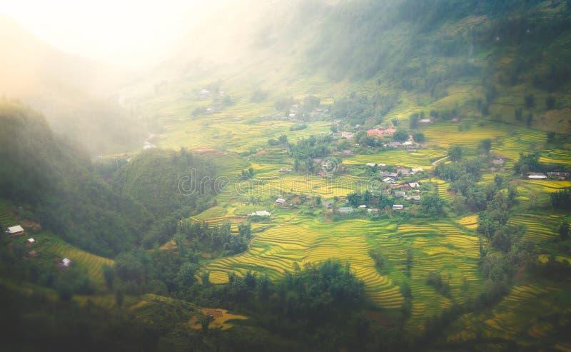 Stordendo Dunset sopra il bello giacimento del riso nel Vietnam immagini stock