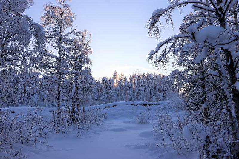 Storforsen in a fabulous winter landscape. Storforsen is Europe`s largest unregulated rapids, where the total length of the entire rapids, from start to finish royalty free stock image
