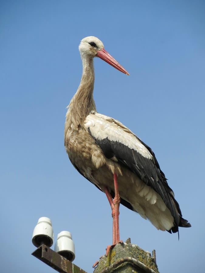 Download Stork stock photo. Image of bill, black, nature, blue - 25648952