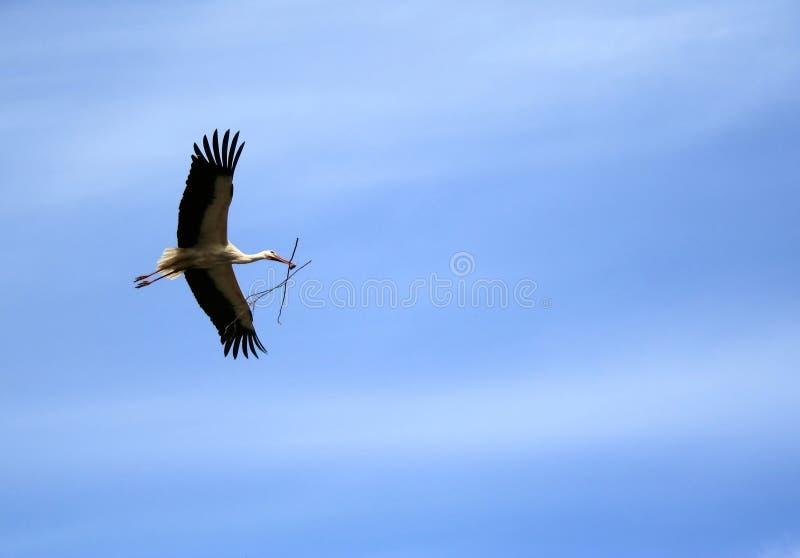 Stork stock photography