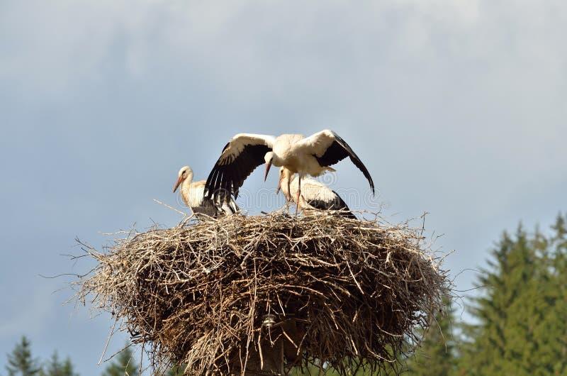 Stork babies stock photos