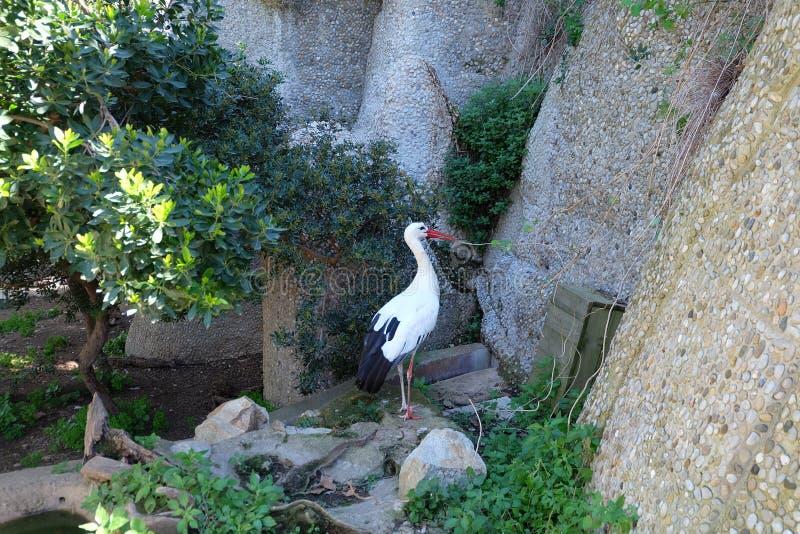 Stork. In Barcelona Zoo, Spain stock photo