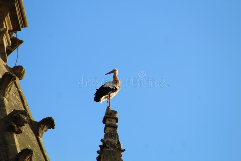 Stork in church of the sixteenth century in Briñas. Spain. A white stork perched on the pinnacle of the church tower of Nuestra Señora de la Asunción royalty free stock photo